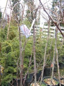 Arhitectura peisagistica (amenajari de gradini)