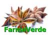 Anason stelat 40gr solaris plant