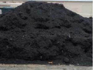 Pamant padure negru vegetal