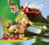 Biostimulator de crestere si fructificare ascovigor foliq