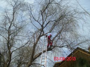 Alpinism utilitar - Cosmetizare arbori