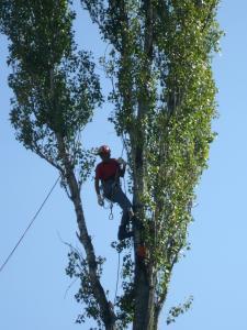 Alipinism utilitar - Toaletari arbori