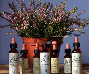 Remedii florale