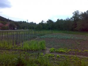 Producator legume fructe