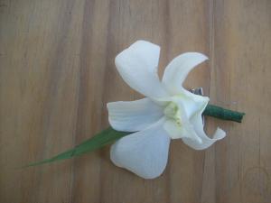 Flori pentru cocarde