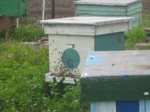 Miere de albine de salcam