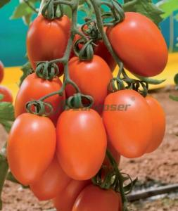 Boli tomate