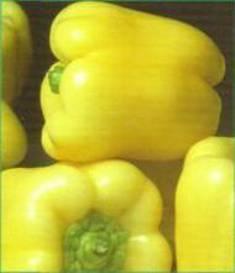 Seminte de tutun