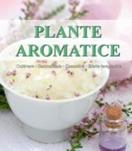 Planta aromatica