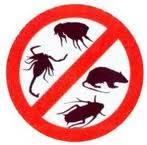 Servicii dezinfectie deratizare dezinsectie