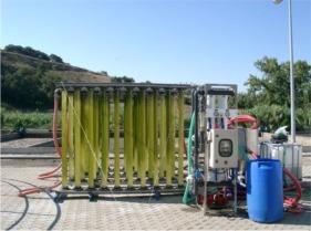 Firme biodiesel