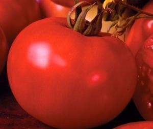 Seminte tomate hibrid de camp