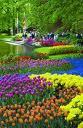 Pamant de flori