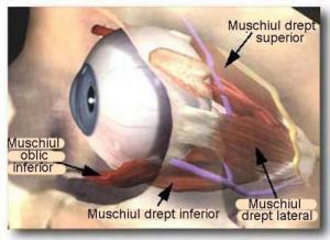 Ochelari stenopici - Pinhole. Vindeca vederea.