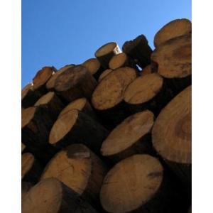 Depozit lemn de foc