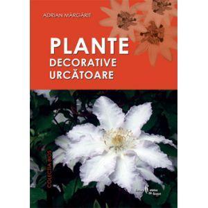 Plante decorative de gradina preturi si oferta for Plante decorative