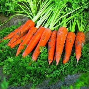 Seminte legume ambalate
