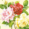 Servetele 33x33cm 3 straturi set20 trandafiri