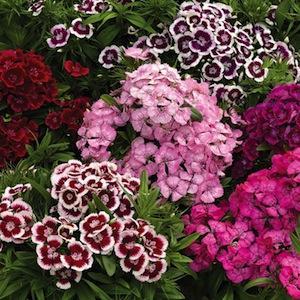 Ghiveci flori pentru exterior