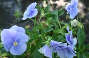 Ghiveci pentru flori suspendat
