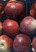 Ferma pomi fructiferi