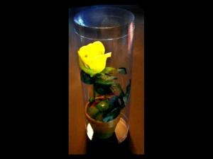 Cutii plastic cilindrice trandafir in ghiveci