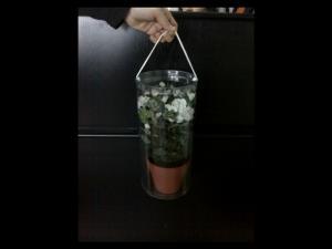 Cutii cilindrice ghivece flori