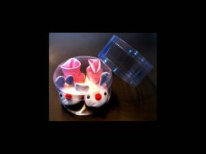 Cutii plastic cilindrice botosei copii