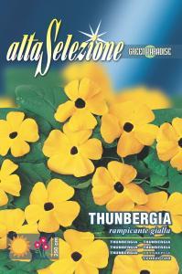 Thumbergia - Cataratoare galbena