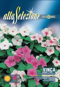 Vinca - Multicolor