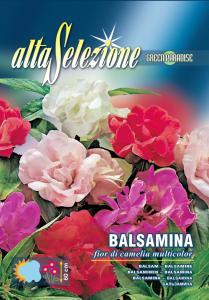 Balsamina - Floare de camelie multicolor