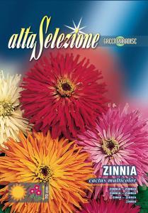 Zinnia -  Cactus multicolor