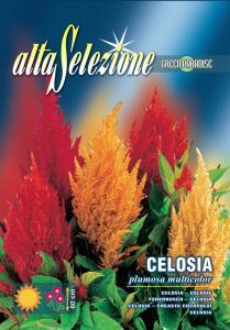 Creasta cocosului - Plumosa multicolor
