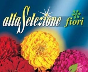 Zinnia - Gigantica cu floare de dalie