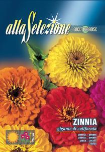 Zinnia - Gigantica de California