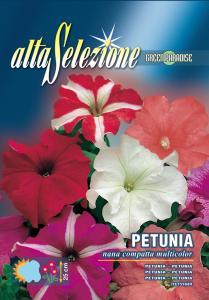 Petunia - Pitica compacta multicolor