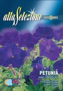 Petunia - Pitica compacta albastra