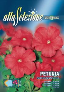 Petunia - Pitica compacta rosie