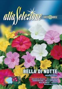 Regina noptii - Multicolor