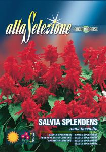 Salvia splendes - Pitica incediu