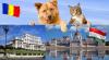Transport caini si pisici ungaria