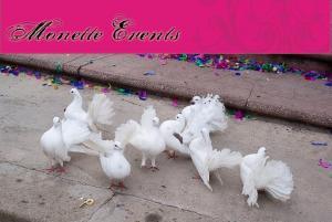 Porumbei pentru nunta