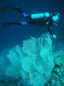 Cursuri pentru scufundari de agrement