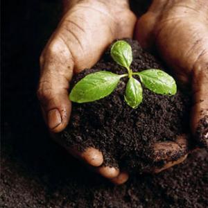 Analiza solului