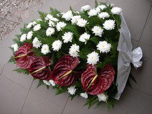 Jerba crizantema