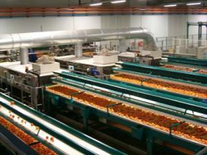 Tehnologia de uscarea fructelor