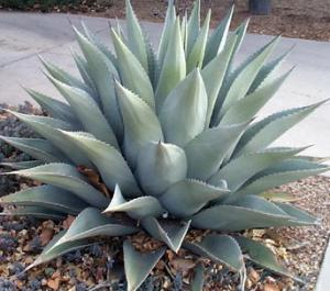 Plante de exterior