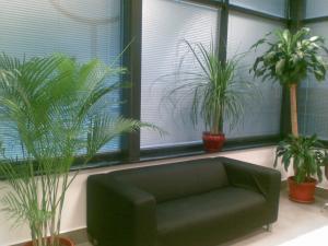 Amenajari plante de interior