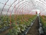Solar legume flori