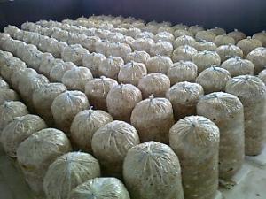 Compost ciuperci